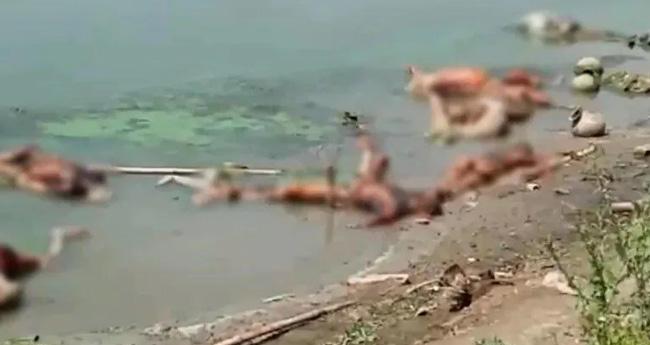 മൃതദേഹങ്ങൾ ഗംഗയിൽ വലിച്ചെറിയുന്നത് തടയണമെന്ന് യുപി, ബീഹാർ സംസ്ഥാനങ്ങളോട് കേന്ദ്രം