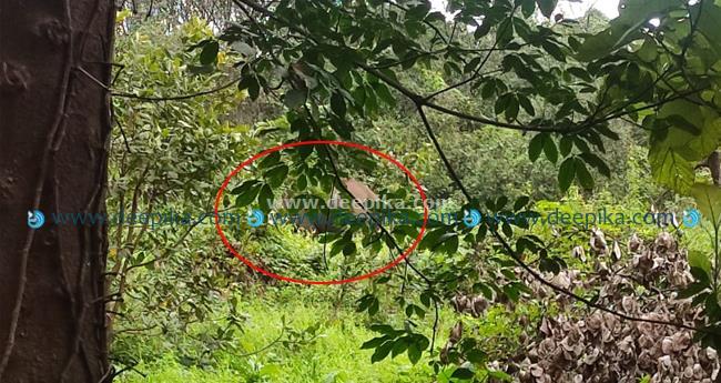 കാട്ടാനക്കൂട്ടം ഇറങ്ങിയത് ജനവാസ കേന്ദ്രത്തിൽ; നിരവധി വാഹനങ്ങൾ തകർത്തു, വ്യാപക നാശനഷ്ടം