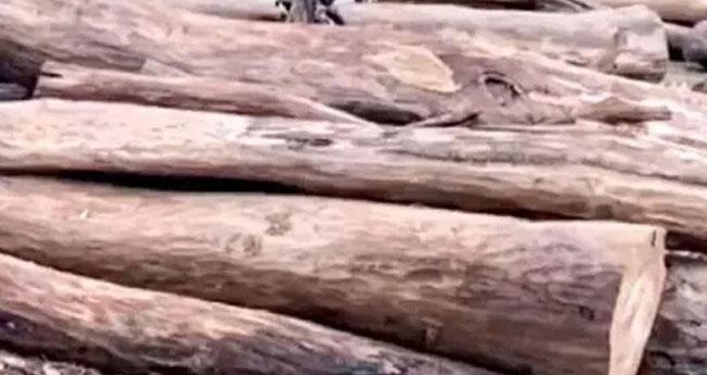 മരംമുറി: വകുപ്പുകളുടെ അന്വേഷണ റിപ്പോർട്ട് പ്രത്യേക  അന്വേഷണസംഘത്തിനു കൈമാറാൻ നിർദേശം