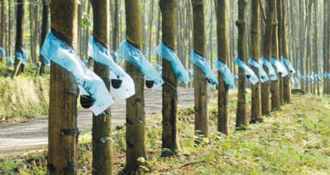 കേന്ദ്ര നീക്കം ഉപേക്ഷിക്കണം: ജോസ് കെ. മാണി