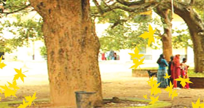 പ്രീഡിഗ്രി അത്ര മോശം ഡിഗിയല്ല